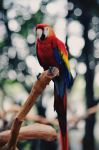 Colorful Parrot by ra3iatha