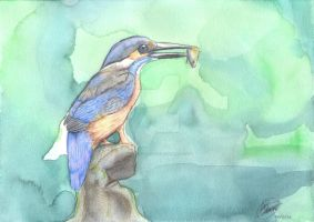 KINGFISHER by UNDISCOVER-art
