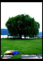 the weeping willow by smockparty