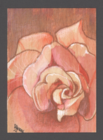 Rose on Birch ACEO by unSpookyLaughter