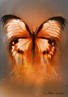Butterfly by Aldana-Digital-Arts