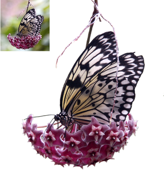 Butterfly 1 Png by lumpi69