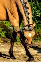 Young Lusitano by madboy