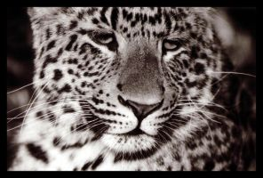 Big Spotted Cat by sekhmet-neseret