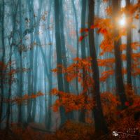 blue and orange by ildiko-neer