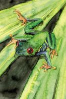 Red Eye tree frog-1 by sinccolor