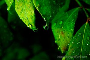 Many Drops by justarus