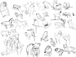Animal sketches by theBellhop