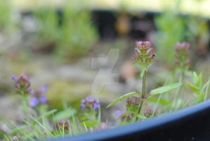 Miniature Forest. by MaePhotography2010