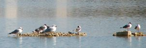 Gulls at the Quarry 3254 by CitizenOlek