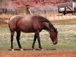 Horses 241 .:Stock:. by WesternStock