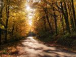 Autumn journey pt.IV. by realityDream
