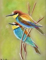 Merops apiaster by imcy