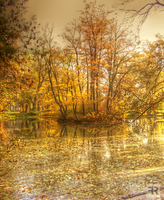 Autumn 2011 XIIII by FilipR8