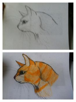 Fernsong Of Thunderclan by Fireblaze625
