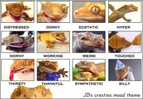 Crested Gecko Moods for LJ by CatharsisJB