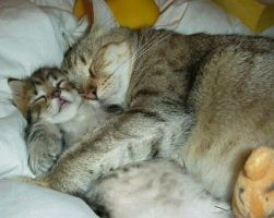 KITTY CATS SLEEPING TOGETHER by Aim4Beauty