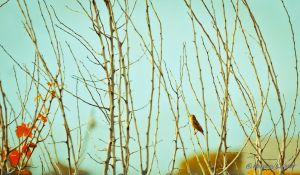 Sparrow Perched on Bare Branches by adiota
