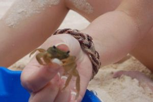Crabs.. :P by Meedle23