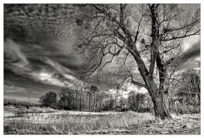 Ents - part 1 by Riffo