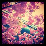 Blossom and Industry by Nitr0glycerin