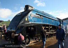 4498 (60007) Sir Nigel Gresley by printsILike