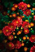 Flowers on the way to the train 2 by bloknayrb