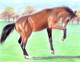 Bay Colt by andpie
