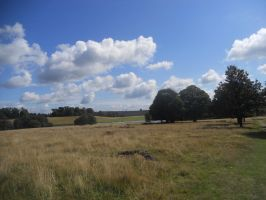 Petworth House and Park 099 by VIRGOLINEDANCER1
