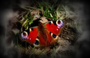 Spring Butterfly by MagicBlanche