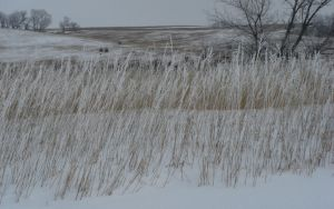 Frosty Prarie Grass by jimmyselix