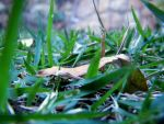 grass 02 by MrNadavik