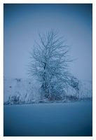white tree in winter by Mihaell