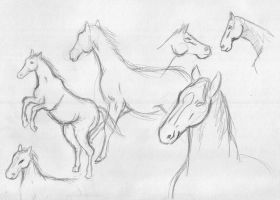 Horses by Norcrel