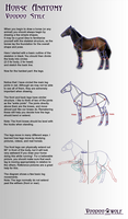 Horse Anatomy by Voodoo-Wolf