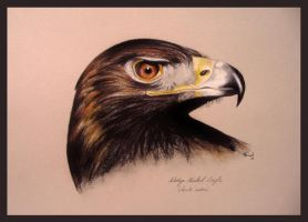 Wedge-tailed Eagle -head study by Sasquatch69