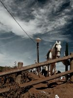 White Horse by Abhijeet-Dinge