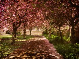 Blossom Pathway by Ionday