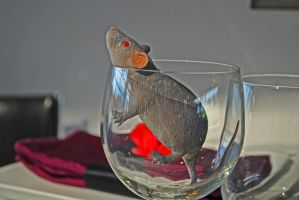 Rat in Glass by eyepilot13
