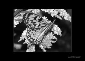 Gentle Wings BW by TheBug