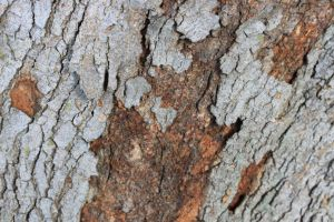 Bark Texture by element321