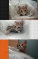 Cat in Wrap by Cola400