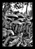 More Shrooms by Ballisticvole