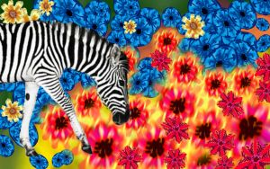 zebra and flower by kennykhh