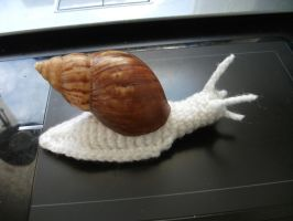 crocheted snail by Kampfkewob