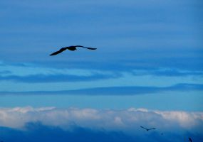 Flying with the Birds by j-a-x