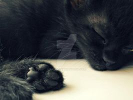 Adorable Paws. by Catist