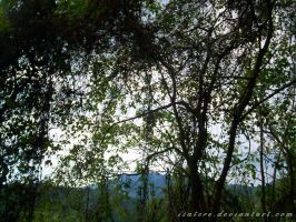 The jungle by isatere