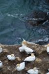 Gannets in love by Jennyjzlei