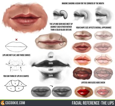 Facial Reference: The Lips by CGCookie